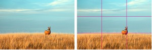 rule_of_thirds_image1